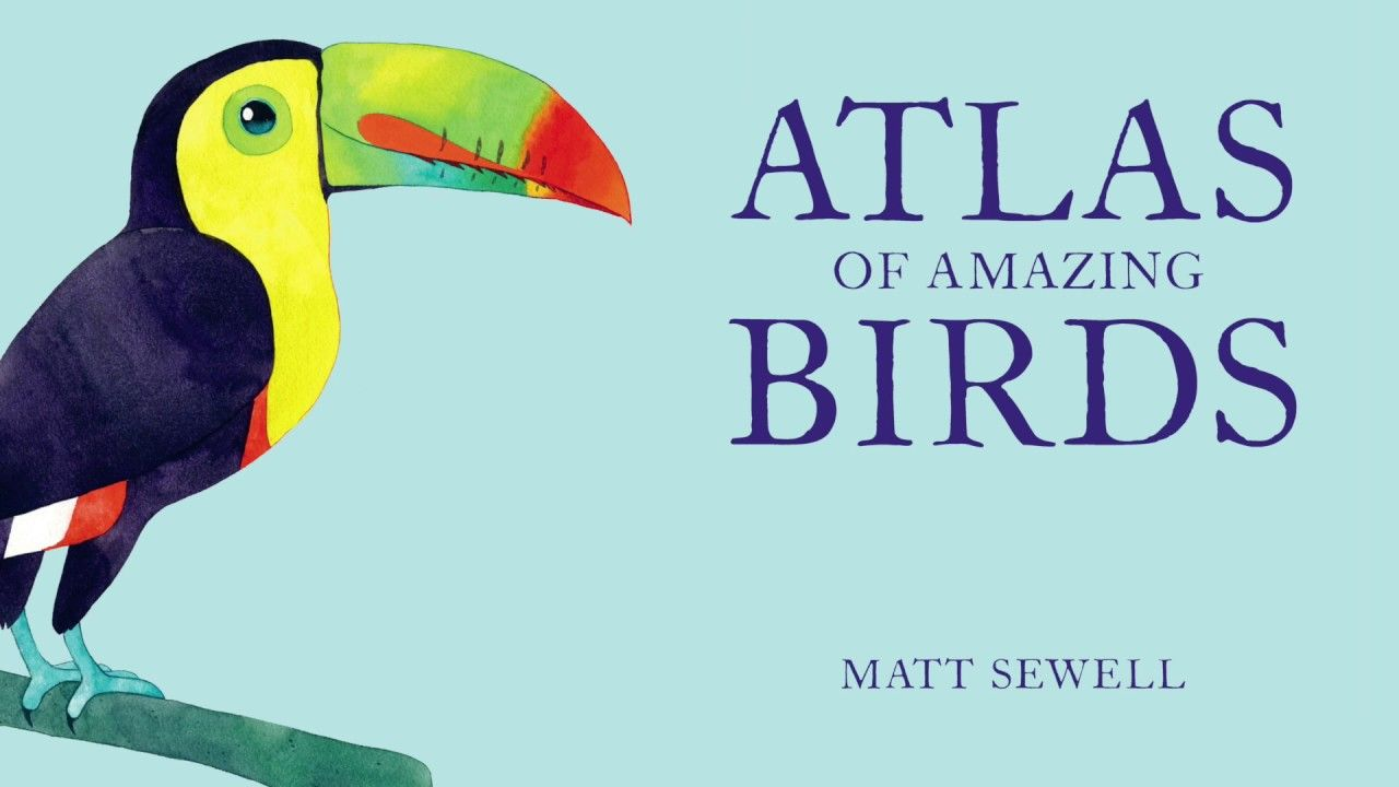 Matt Sewell illustrates a Northern Cardinal from 'Atlas of Amazing Birds'